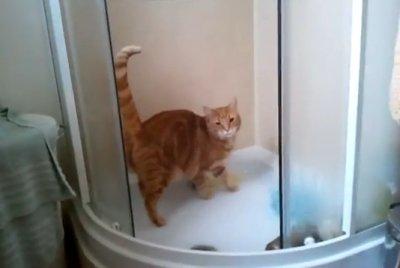 Моджо, кот, который любит стоять под душем