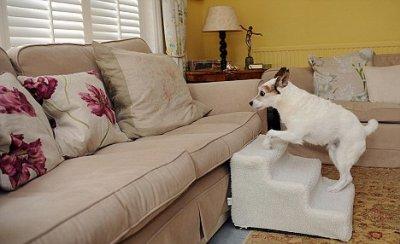 Самая избалованная собака Великобритании