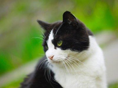27 вопросов и ответов о котах