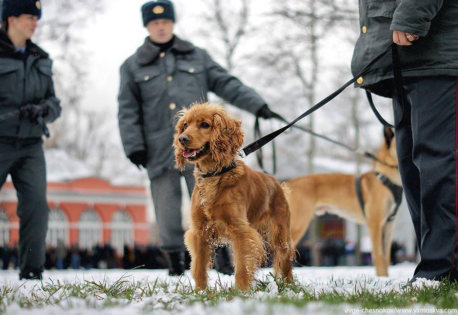 профессия тех кто ловит собак