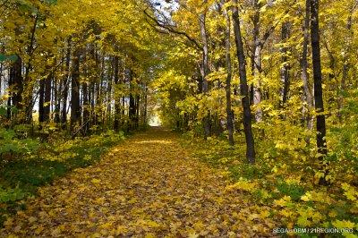 Чебоксарский ботанический сад. Осень