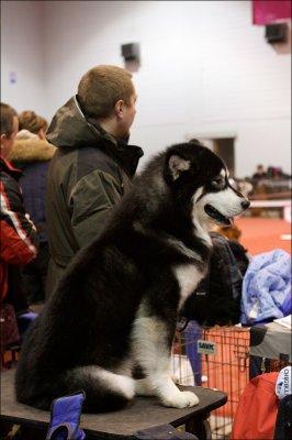 Выставка кошек и собак на Нижегородской Ярмарке