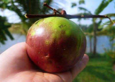 20 экзотических фруктов