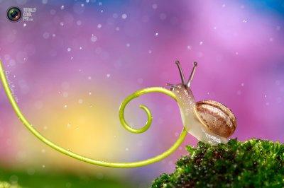 Удивительная макрофотография: неожиданно гламурные насекомые и многое другое