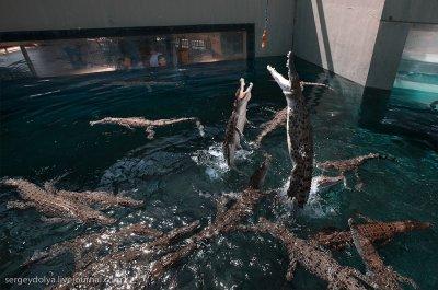 Прыгающие крокодилы Дарвина