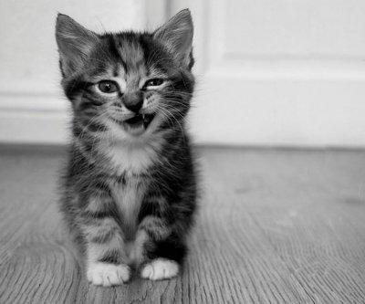 Маленькие котята (59 фото)