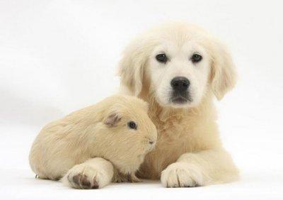 Очень милые животные (10 фото)