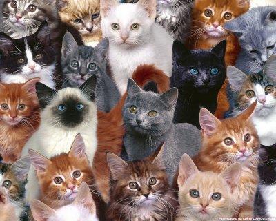 Муж развелся с женой из-за 550 кошек в доме