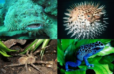 10 самых ядовитых животных на планете