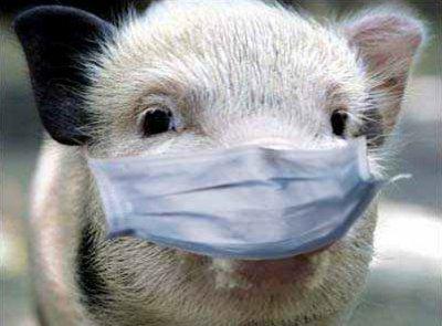 В Чебоксарах продают свинину, зараженную африканской чумой