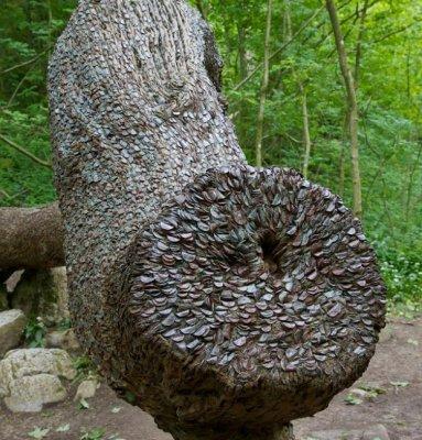 Монетные деревья в Англии