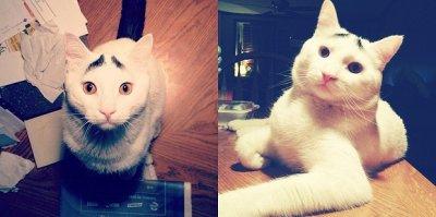 Кот с бровями прославился на весь мир