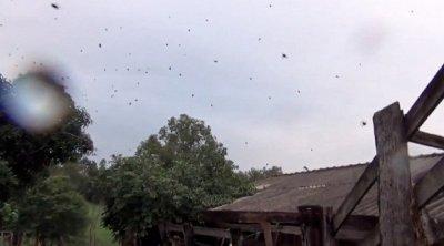 На Бразилию «пролился» дождь из пауков