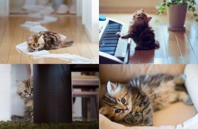 Котенок Дейзи признан самым симпатичным в мире
