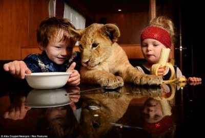 Маленький укротитель и его большая кошка