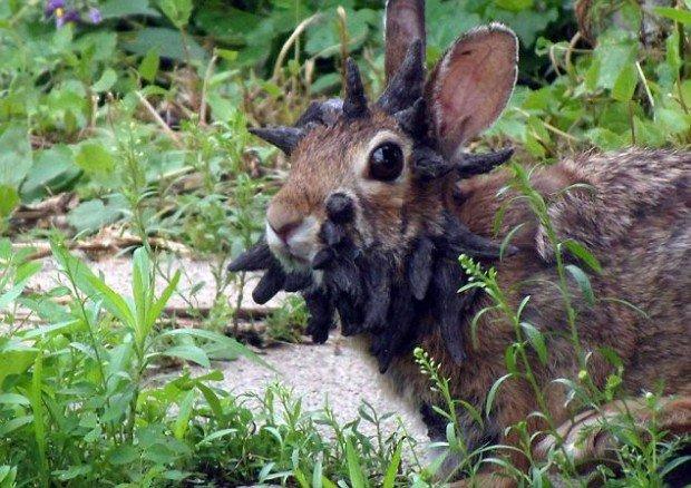 Кролик Переросток Скачать Игру - фото 9