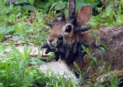 Кролик-Франкенштейн взбудоражил интернет