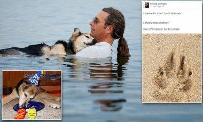 Умерла собака, фото которой тронуло весь мир