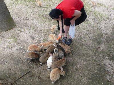 Окуносима – кроличий рай