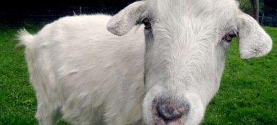 Goat Simulator возглавил чарт Steam