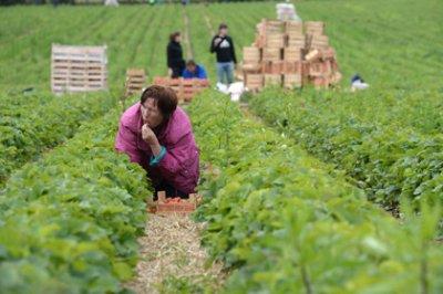 Минсельхоз оценил рост объема производства сельхозпродукции в 281 миллиард рублей