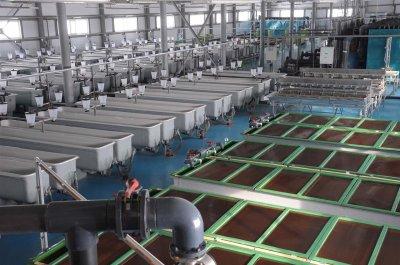 В Самарской области запущен уникальный завод по воспроизводству стерляди и щуки.