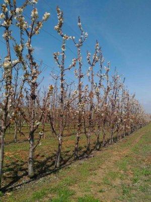 В Крыму заложили многолетние плодовые насаждения