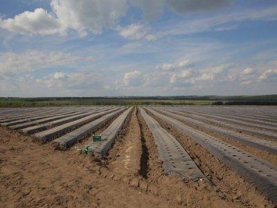 В Нижегородской области открылось промышленное производство ягод