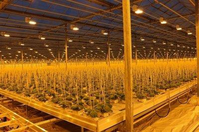 «БОТАНИКА» представила новый рассадный комплекс