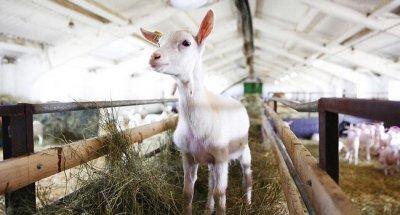 В Марий Эл открылась самая крупная ферма в Европе
