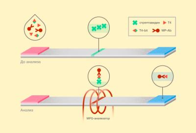 В России разработан первый в мире ультрачувствительный метод быстрого обнаружения низкомолекулярных соединений