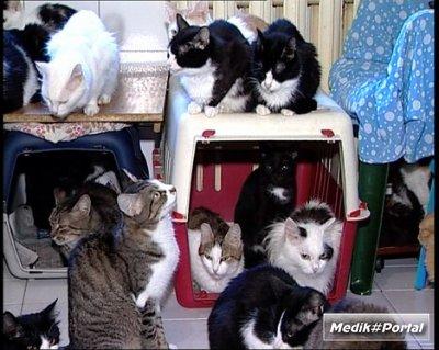 Пасем котов